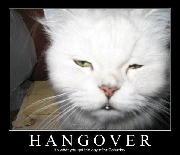 7955-hangover-cat